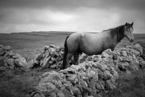 Horse on the Burren