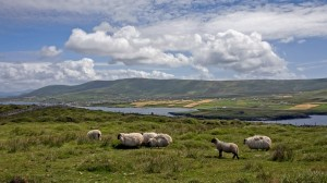 Pastoral County Kerry